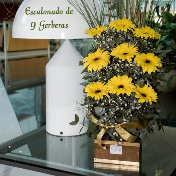 Escalonado de 9 Gerberas - Envío de flores y plantas, Florería La Fleur, Montevideo, Uruguay.